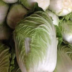 大量供应白菜,白菜鲜嫩9成心,净棵白菜4-6斤,陆地白菜...