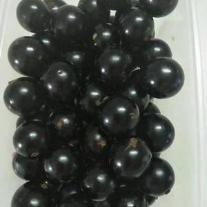 树葡萄又名嘉宝果产地大量出售,欢迎咨询