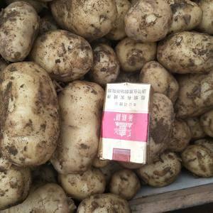 万亩马铃薯基地,大量上市,薯形好,外观漂亮,无青头,和虫...