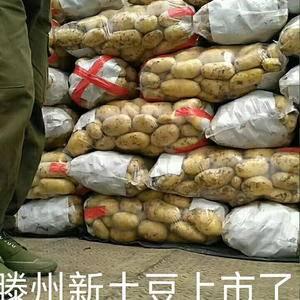 滕州万亩荷兰十五土豆大量上市,黄皮黄心,质量好,耐储存