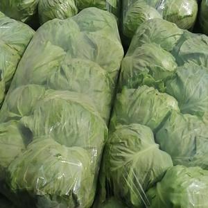 河南省博爱县蒋村蔬菜市场甘蓝,茄子,西葫芦,豆角,有机花...