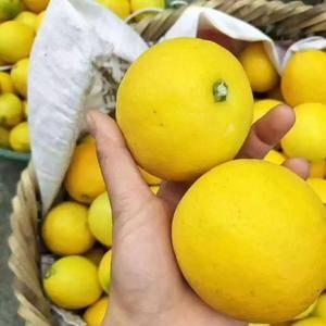 重庆万州柠檬,黄柠檬,需要者电话联系,有散装,有包装。随...