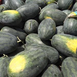 广西黑美人西瓜大量上市,西瓜又大又甜,欢迎各位老板来收购...
