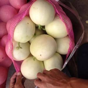 陕西大棚甜瓜13992348185开始上市供应,品种齐全...