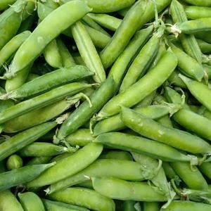 精品大豌豆,颗粒饱满,5万斤,500斤起批
