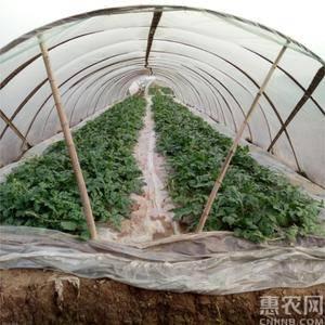 西瓜种植基地位于湖南省岳阳市华容县,地理位置优越,交通便...