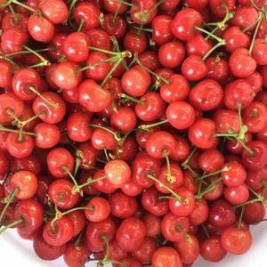 自家果园的大樱桃,肉质鲜美口感极佳,欢迎大家来采购批发,...