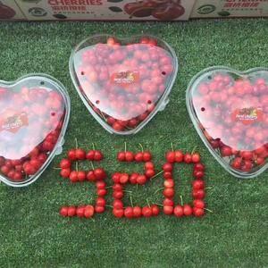 我处现露天樱桃大量上市了,品种有美早,红灯,黄蜜,龙冠。...