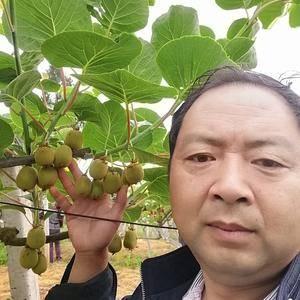"""红阳猕猴桃荣为""""水果之王"""