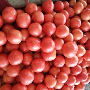 西红柿大量上市永年南大堡蔬菜市场张氏蔬菜商行134834...