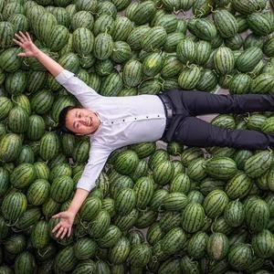 大量供应各类西瓜