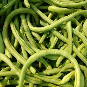 白豆王,绿豆王,紫豆角现已上市需要的可以下单