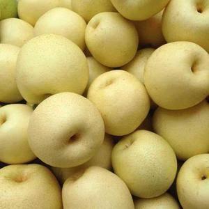 自己种植,大量批发酥梨,雪花梨,皇冠梨