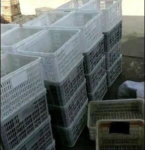6万亩青壳小龙虾养殖基地,各种规格都有!常年供应寻求长期...