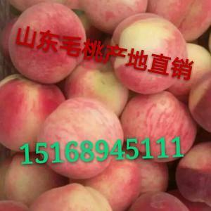 陆地毛桃批发,15168945111毛桃产地批发大量供应