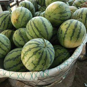 自己种植地的西瓜,美都,8424都有,欢迎来购,在绍兴诸...