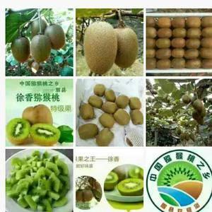预售无公害合作社400亩原产地徐香猕猴桃,9月上市80克...