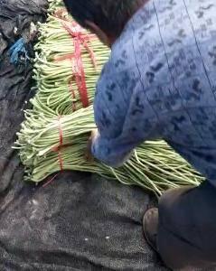 聊城国辉瓜果蔬菜代收基地,现在主要是长豆角有需要的联系