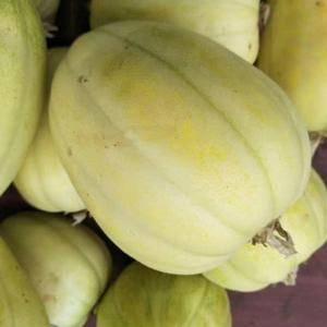 出售香瓜,联系15235023338