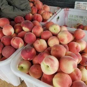 大量供应突围桃子,几百亩桃园,国道旁边交通方便,质量、甜...