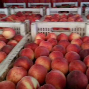 河北邢台威县大量桃子上市了,有需要的可以联系我13933...