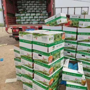 早春红玉西瓜,2K西瓜大量出售中13869687569