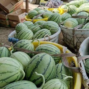 拿比特西瓜,皮薄瓜甜,无籽,二茬头茬