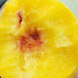 自家嫁接的桃树苗,品种有新黄金蜜,贵妃黄,油20.甜16...