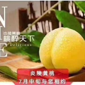 自家的黄桃就要上市了,批发零售请联系1558778956...