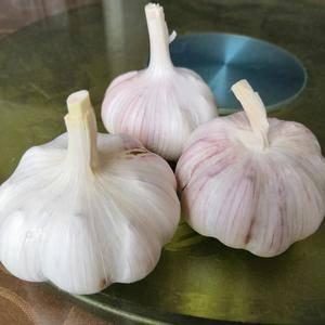 大蒜蒜种3.2一斤