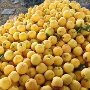 大量供应各种油桃,黄桃,毛桃,货源充足价格便宜产地直销