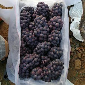 河北邯郸京亚葡萄大量供应中,希望能与各地的果商老板们精诚...