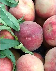 苍方早生,大红桃♥️现已大量上市,货源充足,质量保证,代...