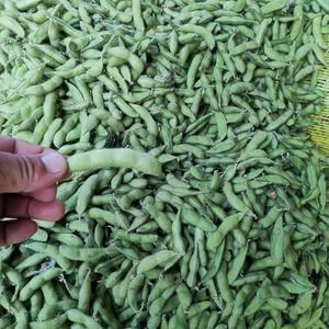 邳州精品毛豆大量上市中,需要的联系我。
