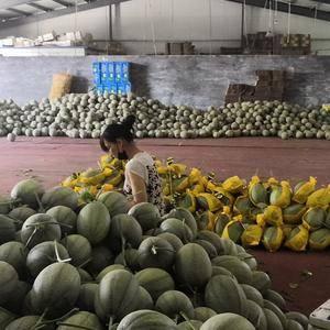 建海果蔬种植专业合作社 常年供应甜王西瓜,无籽西瓜 黑美...