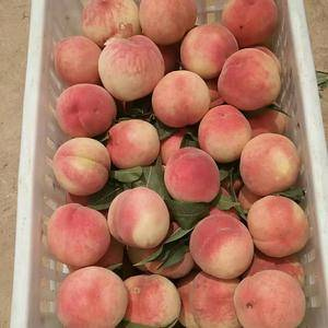 本人家中种植上百亩桃,可一件发货,可大量采购,可以代收,...