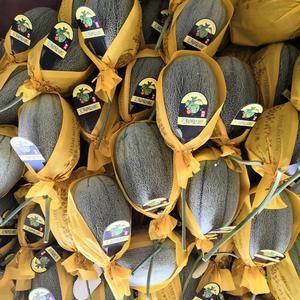农产品产地大量供应西州蜜系列17 25号各种类甜瓜齐全专...