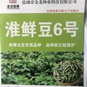 淮鲜豆六号  毛豆种子  晚熟品种 豆荚产量高