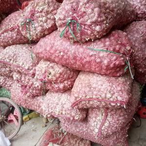 纯红根蒜苗种孑,大棚,露地均可。
