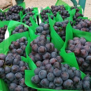 藤稔葡萄开始大量上市中