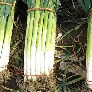 出售长白大葱量大质优,叶绿无药害,白长40公分,地处疏菜...