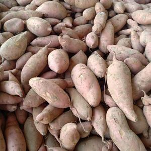 龙薯九号红薯通货