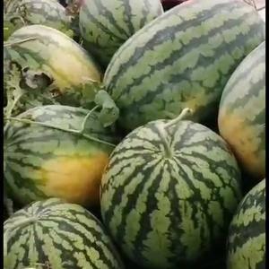 西瓜质量好熟度好大红瓤甜度高