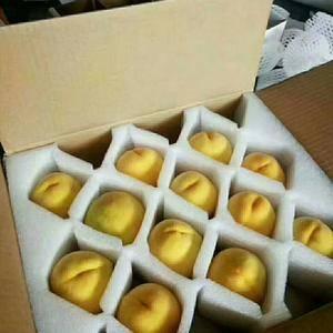 香甜可口的黄桃上市了,有需要的老板们可以合作,有意着来电...