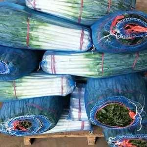 大葱主产地,常年加工净葱,可根据客户要求加工