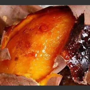 烟薯二十五产地大量有货,支持各种规格