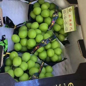 供应阳光玫瑰葡萄,欢迎全国客商光临,果品可分级,另有各种...