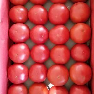 直销产地大量西红柿上市!硬粉、大红柿子供应电话15547...