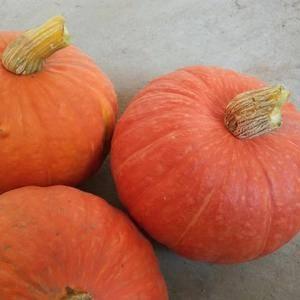 红南瓜,品种多,瓜型好。