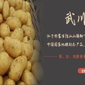 武川土豆 武川县马铃薯种植区海拔高、日照充足、 雨热同...